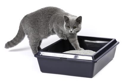 Katzenklo Bild