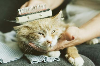 Bild Katzenpflege
