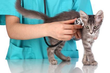 Tierarzt mit Katze