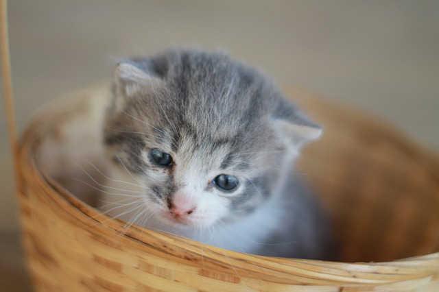 Katzenwelpe im Korb