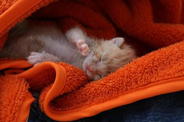 Katzenwelpe im Tuch