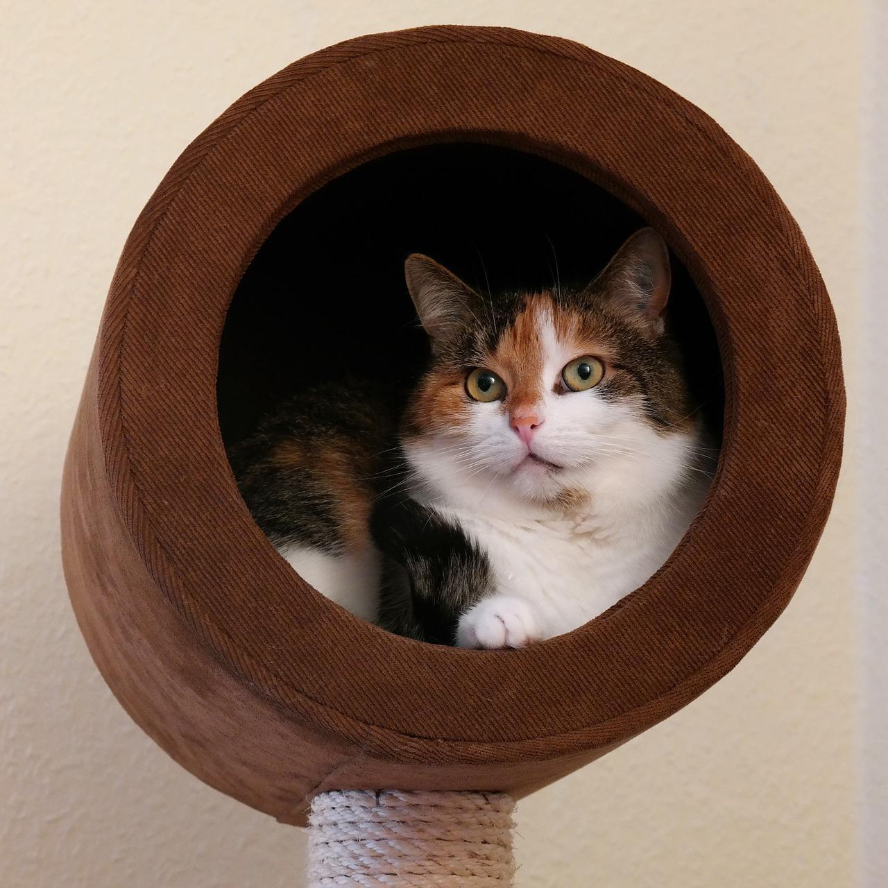 Tipps zur Sicherung des Balkons für Ihre Katze | markt.de