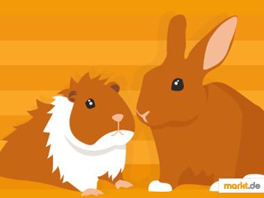 Grafik Meerschweinchen und Kaninchen
