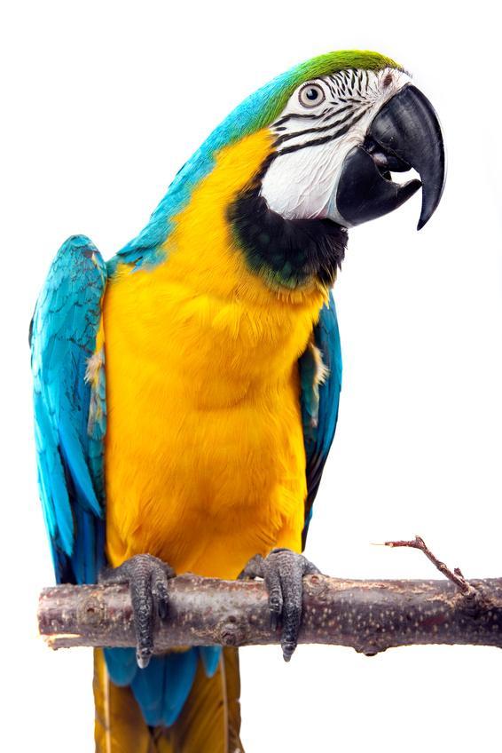 Papageien Bild