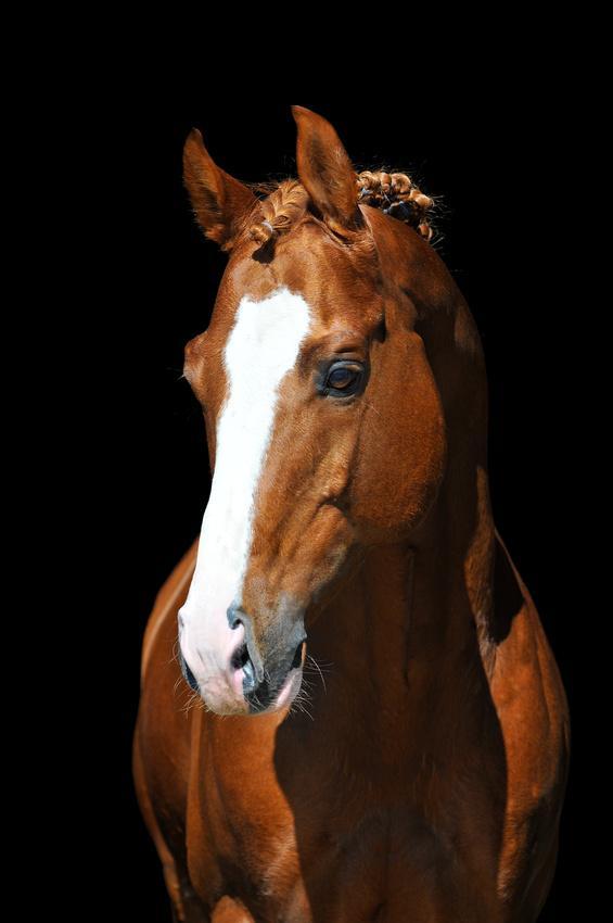 Pferde Bild