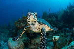 Bild Schildkröte