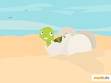Grafik Schildkrötennachwuchs
