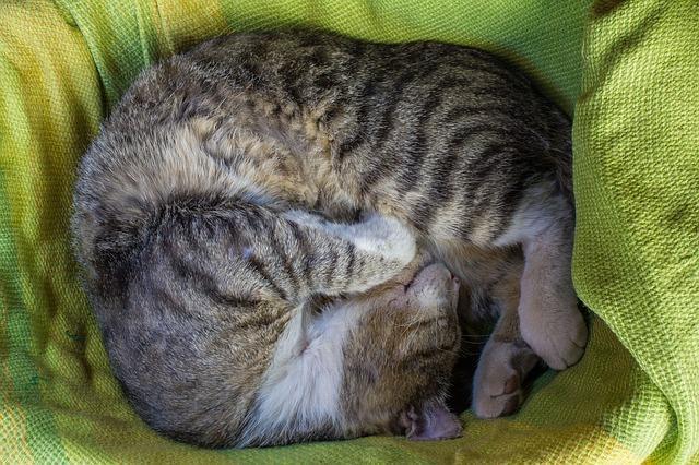 katzenratgeber katzenbett gem tlicher schlafplatz f r die miezekatze. Black Bedroom Furniture Sets. Home Design Ideas