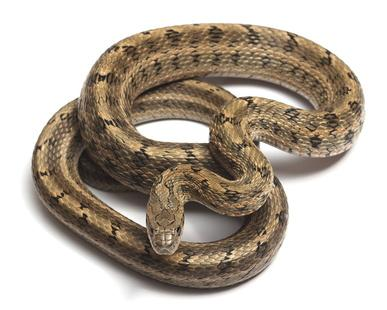 Schlangen Bild