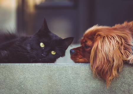 Schwarze Katze und Hund