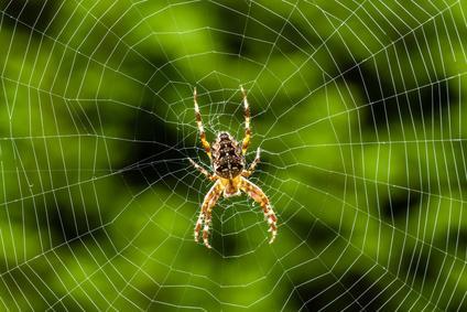 Spinne Bild