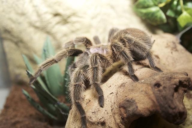 Bild Spinnen