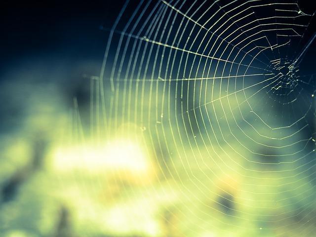 Bild Spinnennetz