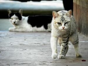 Verletzte streunende Katze