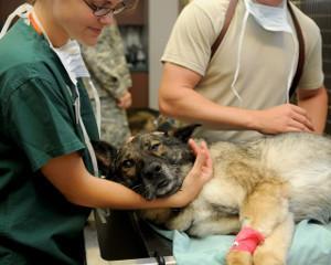 Bild Hund beim Tierarzt