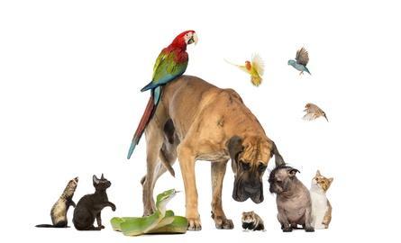 Viele verschiedene Tiere / Tiernamen