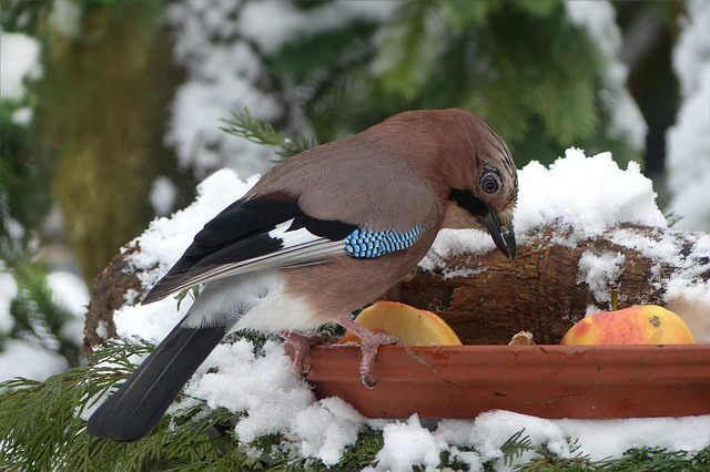Bild Winterfütterung der Vögel