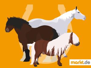 Grafik Pferderassen-Quiz