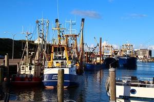 Bild Fischfang