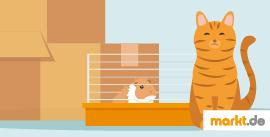 Grafik Tierumzug