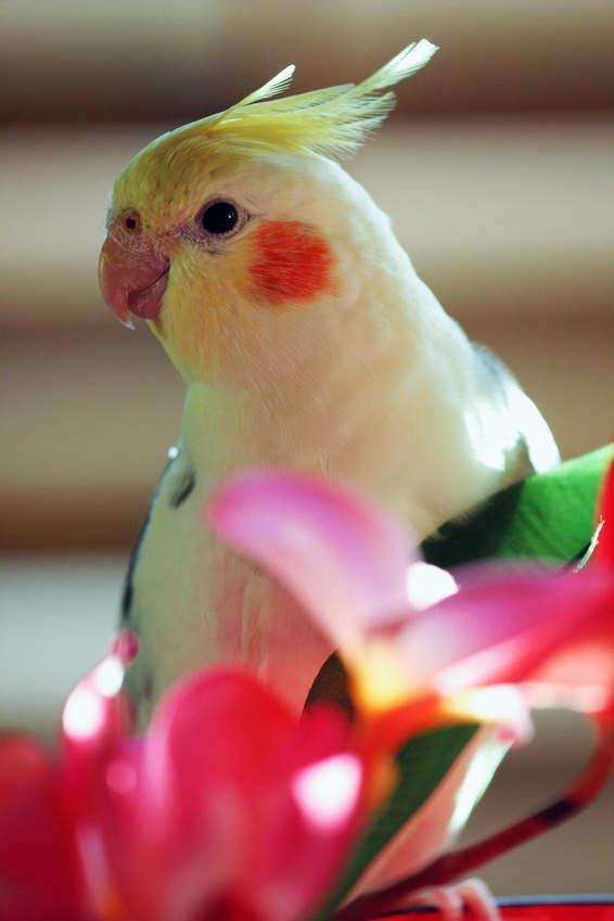 Bild von Papagei