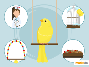 Grafik Gesundheit Kanarienvögel