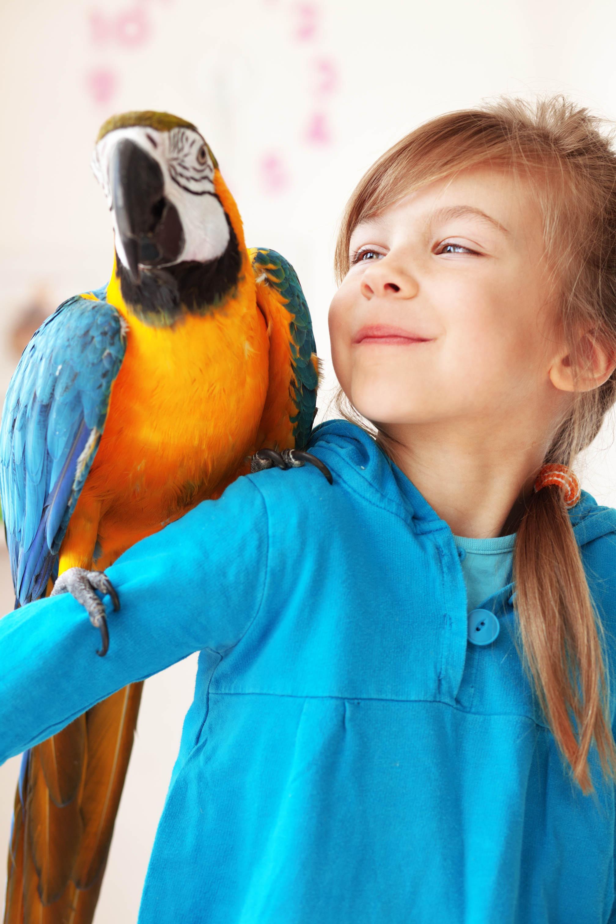 Bild von Kind mit Papagei