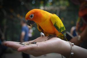 Papagei frisst von Hand