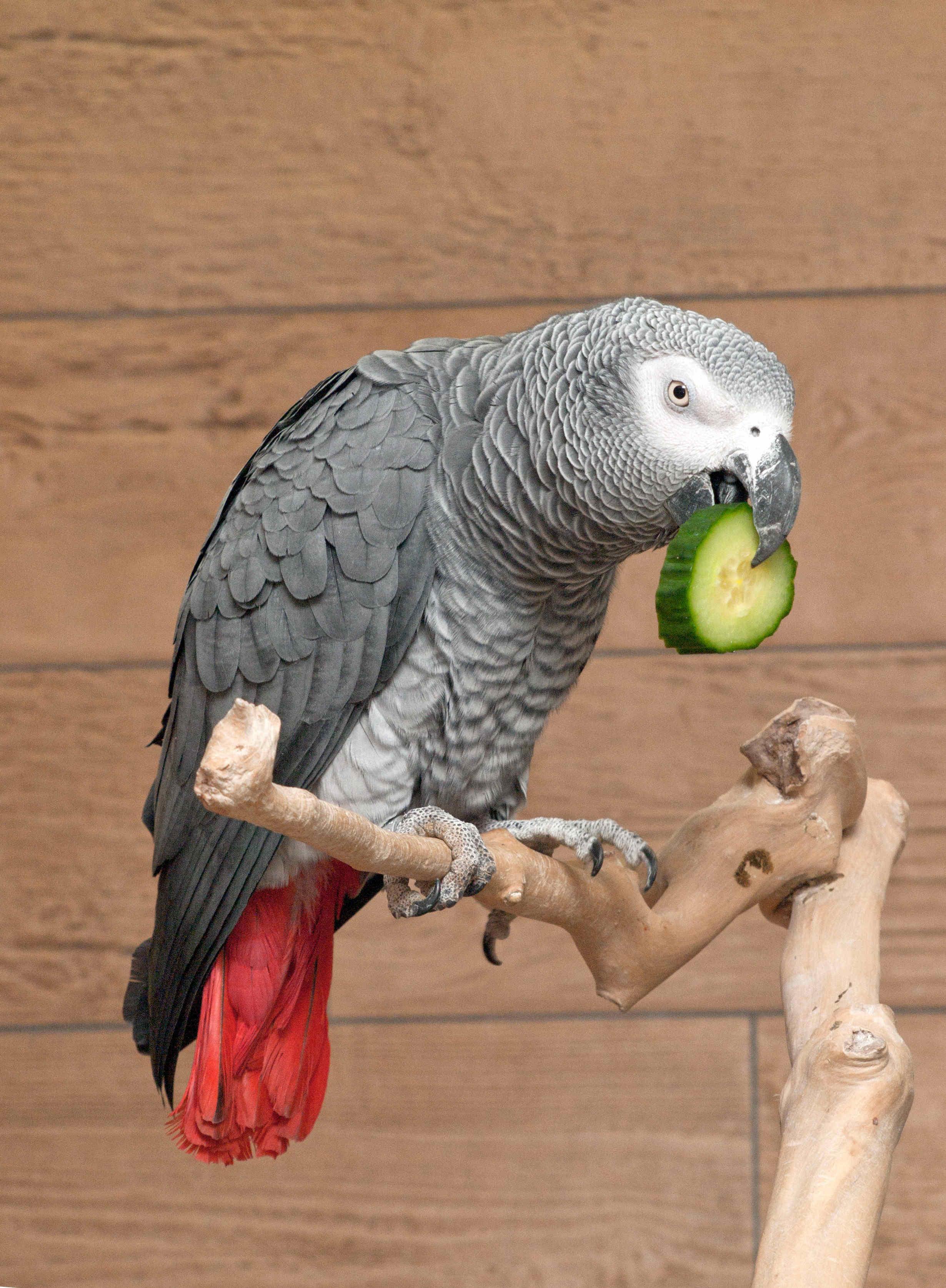 Bild von Papagei beim Fressen