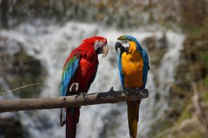 Papageien auf Ast