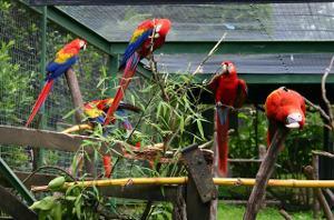 Bild Papageien in großer Voliere