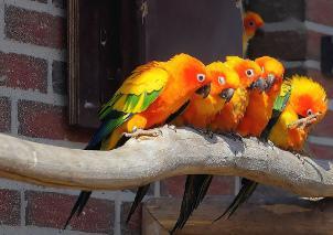 Bild von Papageien
