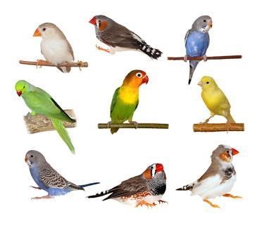 Bild Vögel