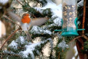 Vogelfütterung Futtersäule