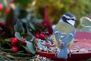 Zeitraum für Vogelfütterung