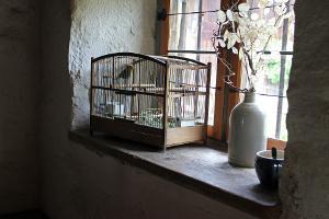 Bild Vogelkäfig Farbfink