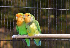 Vogelkäfig Größe