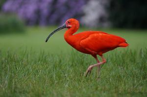 Bild Vogel in Vogelpark