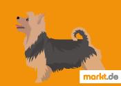 Grafik Australian Terrier