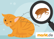 Katzenflöhe wirksam bekämpfen