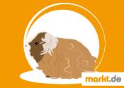 Grafik Texel Meerschweinchen