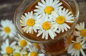 Bild Kamillenblüten in Öl für DIY Creme