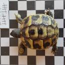 Tortuga94